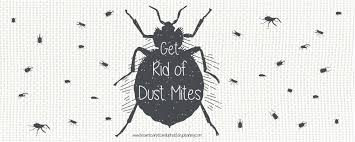 Tiny White Mites In House by How To Get Rid Of Dust Mites In Your Homes Brown U0027s Carpet And