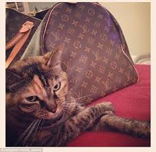 Rich Cat Meme - rich cats of instagram meme boomsbeat