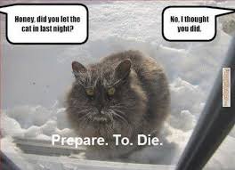 Honey Meme - honey did you let cat meme cat planet cat planet