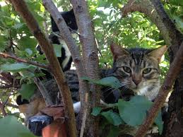 Cat Treehouse Cattreehouse Twitter Search