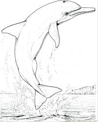 printable dolphin images printable dolphin coloring pages coloring pages dolphin jump