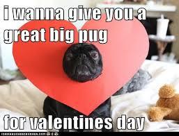 Valentine Memes Funny - i has a hotdog valentines day pug funny dog pictures dog memes