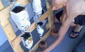 Watering Vertical Gardens - build an easy watering vertical herb garden video treehugger