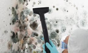 top 6 best omaha ne mold removal experts angie s list