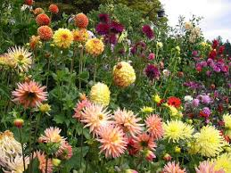 Types Of Garden Flowers - different type of flowers perennial annual spring summer fall