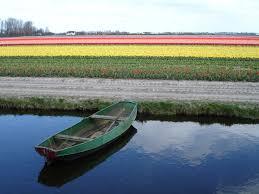 tulip fields richard tulloch u0027s life on the road
