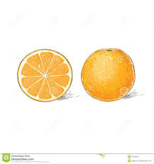lemon citrus fruit color sketch draw isolated over stock vector