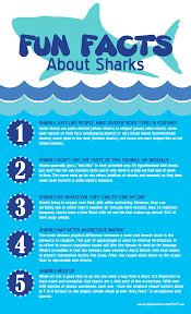 facts about sharks infographic facts