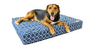 why your dog needs a memory foam dog bed eluxury