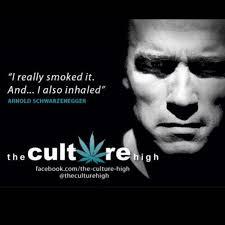 Schwarzenegger Meme - weed memes schwarzenegger smoked pot meme