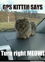 Purrrfect Meme - this is the absolute purrfect way to travel be sure you always have