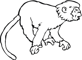 baby monkey coloring pages awesome find this pin and more on baby