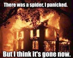 Funny Spider Meme Pictures To - 53 best spiders images on pinterest spiders hand spinning and