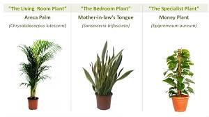 Best Indoor Plants For Oxygen by Beating Hong Kong U0027s Bad Air The Best Ways To Defend Your Lungs