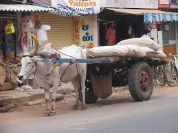 indian cart india cart cow shop indian job