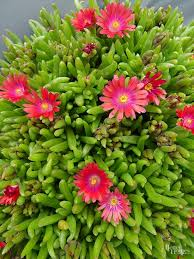 Best Plants For Rock Gardens Best Plants For Rock Gardens Plant Gray Green And Tones
