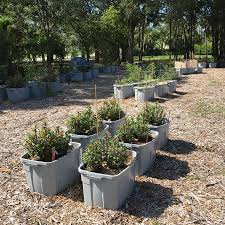 native plants for butterfly gardening benton soil u0026 water garden news classes u0026 events page 2 of 16 heathcote botanical