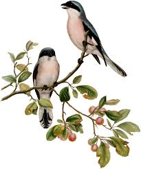 gorgeous antique birds on branch image the graphics