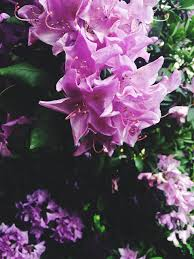 734 images about purple aesthetic on we heart it see more