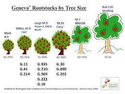 rootstocks wsu tree fruit washington state