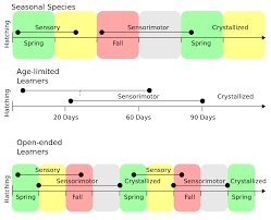 Anatomy And Physiology Songs File Bird Song Development Timeline Svg Wikimedia Commons