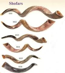 shofar horn 83 best shofar images on israel trumpets and holy land