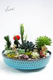 succulent planters for sale 418 best images about plantas no interior on pinterest gardens