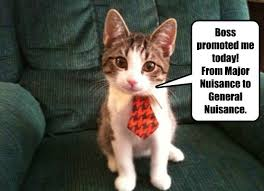Business Cat Memes - still no more monies lolcats lol cat memes funny cats