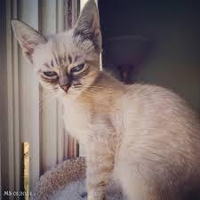 4 cats compared to grumpy cat u2013 pet radio magazine