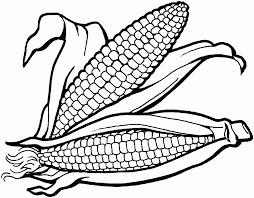 Corn Field Coloring Pages Corn Field Coloring Pages Corn Stalks Ear Coloring Page