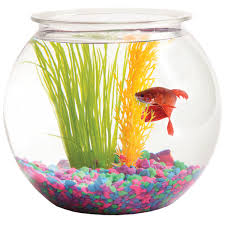 hawkeye 1 gallon bubble shaped fish bowl 8