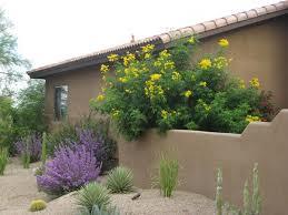 create desert landscaping ideas design a back to loversiq