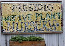 native plant nursery presidio native plant nursery anne of green gardens
