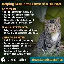 hurricane preparation tips for pet owners cat caregivers in path