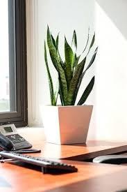 Indoor Plant For Office Desk Desk Best Desk Plants 12 For The Office Bloomberg Indoor Plants