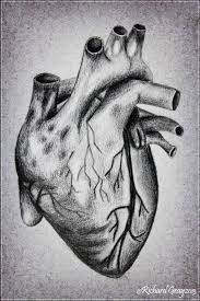 the human heart by ricgraydesign on deviantart
