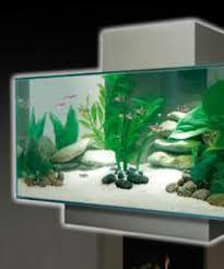 designer aquarium designer aquariums surge in popularity reports uk retailer