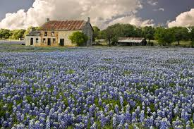 Texas traveled definition images Wildflowers of texas hill country springtime texas hill country jpg