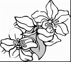 excellent small flower coloring pages with coloring pages flowers