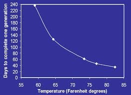 What Temperature Do Bed Bugs Die The Bed Bug Lifecycle Diagram Video Guide And Pictures