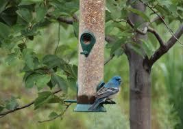 birding is fun feeder friday backyard birding