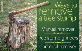 3 super efficient ways that describe how to remove a tree stump