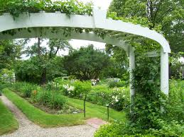 arching trellis photo page everystockphoto