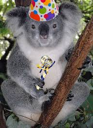 all i want for my birthday is pictures of koalas bodybuilding