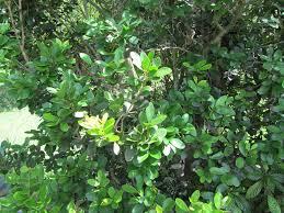 fairchild tropical botanic garden u003e home gardening u003e creating a
