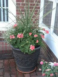 Summer Flower Garden Ideas - 33 best summer flowers images on pinterest flowers gardening