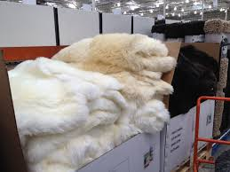 Faux Fur Area Rugs by Decorating White Sheepskin Area Rugs Costco For Floor Decoration