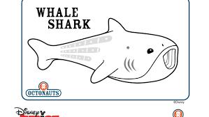 image gallery octonauts whale shark