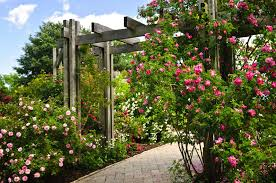 landscaping structures trellis archway or pergola