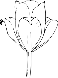 tulip flower coloring pages for girls flower coloring pages